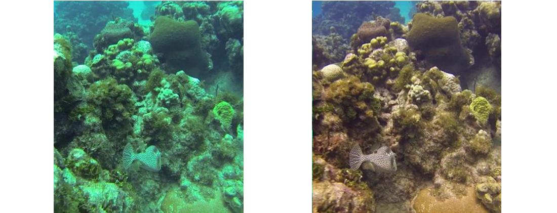 Изображение под водой с фиолетовым фильтром GoPro и без него